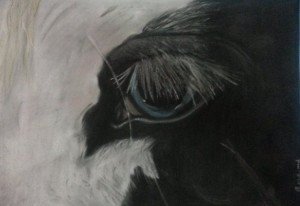 Rosa Eye
